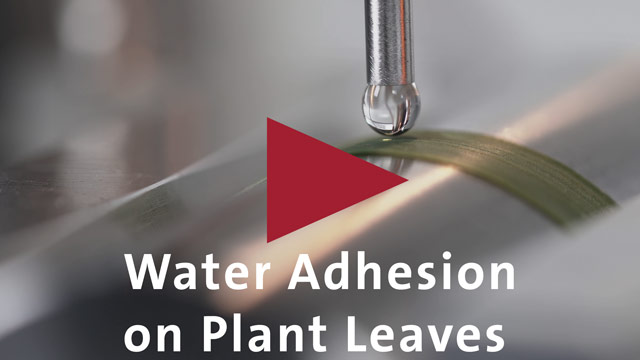 Application video: Water Adhesion on Plant Leaves